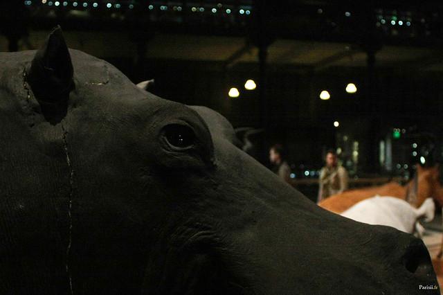 Cet hippopotame empaillé est mal en point