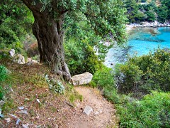 FOOTPATH DOWN TO THE COVE. (ronsaunders47) Tags: trees coast greece shore paths greekislands thassos