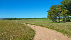 Sunny Day (Rique50) Tags: road green field landscape country sunny land plain