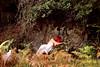 Fragile as a rock (stefaniebst) Tags: nature naturelover portrait selfportrait autoportrait portraiture rock rocher forest forêt woods woodland femme woman girl fragile force redhair redhead fineart fineartphotography conceptphoto conceptualphotography photography automne autumn fall season