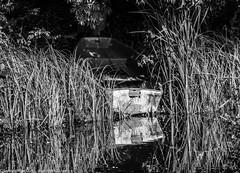 9Q6A6674 (2) (Alinbidford) Tags: alinbidford alancurtis brandonmarsh kingfisher greyheron heron kestrel