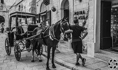 Imdina Life (Darren Cascun - photos.darrencascun.com) Tags: bw hourse imdina malta maltese life transport
