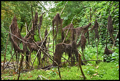 Shapes in the Woods (Vide Cor Meum Images) Tags: mac010665yahoocouk markcoleman markandrewcoleman videcormeumimages vide cor meum nikon d750 cressing barns temple knights river bed weeds woods