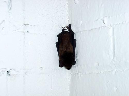 corner piece (bat) (2001)