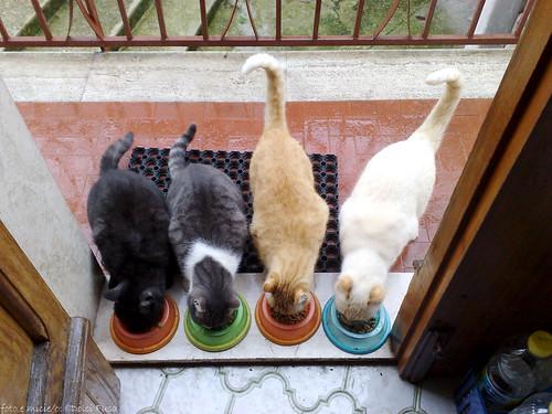 Feeding Time 4 Four