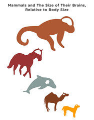 Correlation established between the sociality of mammals and the size of their brains, relative to body size (GEEKSTATS) Tags: horses dogs animals monkey camel statistics mammals infographic infograph