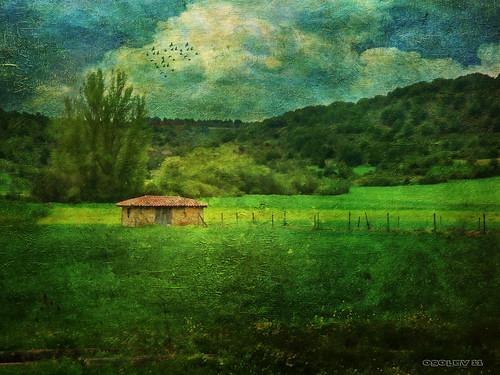 Campos de Calatañazor