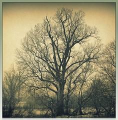 Winter Tree (Digital_Third_Eye) Tags: trees winter snow tree nature wisconsin landscape geotagged dead outdoors photography woods sad branches january madison frame cloudless textured naturescenes 2011 danecounty fujis1500 digitalthirdeye geo:lat=43103927 geo:lon=89318880 lat43103927 lon89318880