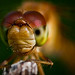 Libellule - Dragonfly