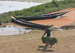 boats rice and hard work (terry.1953) Tags: water field boats rice paddy farmer sylhet bangladesh paddyfield fulshaind