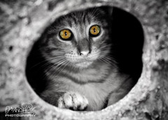 The hole (Oscar.vng) Tags: bw cat canon cutout photography eos photo eyes foto hole agujero kitty sigma bn ojos gato 28 fotografia 70200 gatito desatured desaturacionselectiva 400d oscarvng