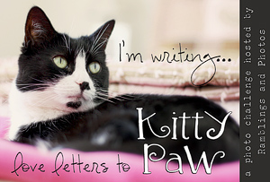 Love Letters to Kitty Paw