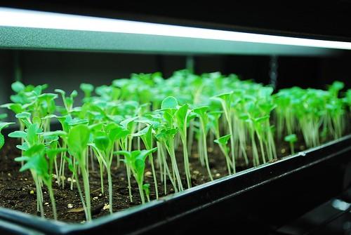Seed Starting 2