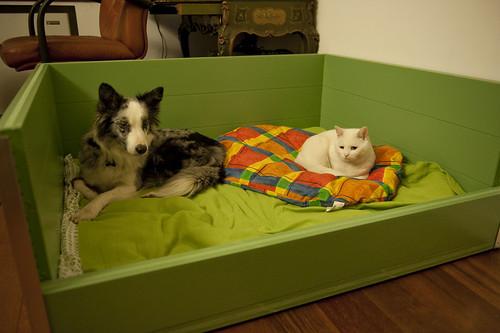 Sala Parto Per Cani : Cassa parto per cani sicilia likesx annunci gratuiti case