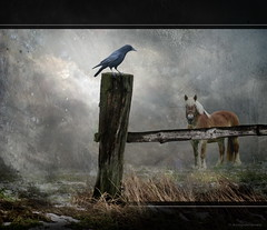 Gatekeeper (h.koppdelaney) Tags: life friends horse art digital photoshop energy play symbol god spirit magic philosophy german crow wisdom moment underworld metaphor raven porter mythology myth gatekeeper symbolism psychology archetype hugin wotan edgsrallenpoe