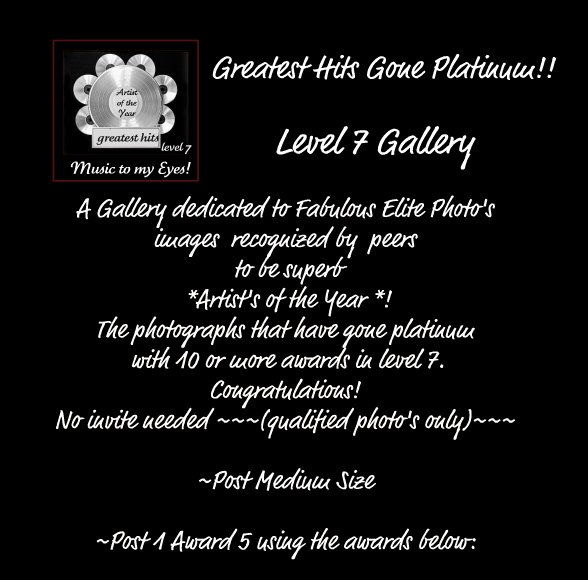 Artist of the Year Greatest Hits Gallery