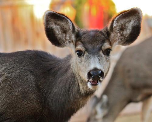 フリー写真素材, 動物, 哺乳類, シカ科, 鹿・シカ,