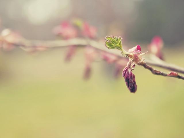 Spring - Buds