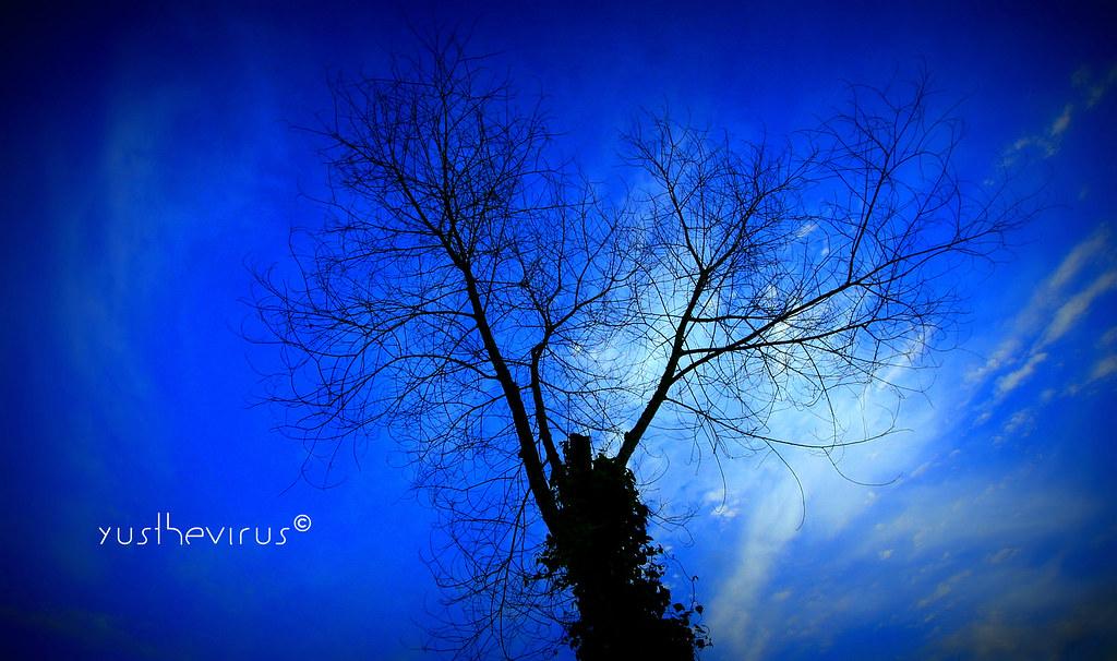 blue tree..