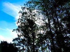 Hidden Sun (Vitor Chiarello) Tags: cameraphone sky tree cellphone samsung cu motorola celular rvores zn5 es25
