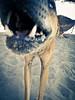 (Stromboly) Tags: dog playa perro canino lomofake diente lx5 mandíbula