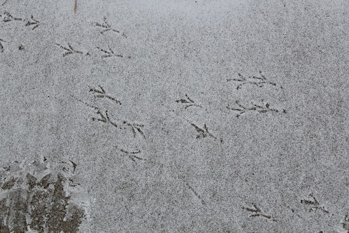 Birdie Tracks