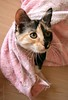 Kesakuu6-2007 138 (Fantasyfan.) Tags: pets cute animals topv111 tag3 taggedout out furry topv555 topv333 kitten tag2 tag1 fluffy towel worn playfull playful milli fantasyfanin highqualityanimals