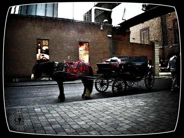 Horse n Buggy