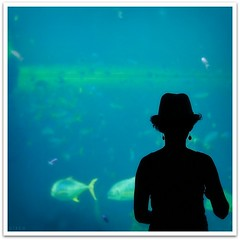 Deep Blue (cisco ) Tags: blue portrait fish hat backlight square earring australia cisco soul nsw newsouthwales darlingharbour ritratto sidney backshot 500x500 presenze soulsound eos5dmarkii keikomatsuideepblue