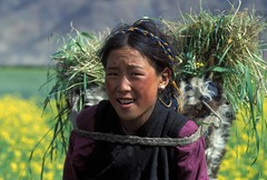 Woman carries a bundle of hay (World Bank Photo Collection) Tags: china woman look work asia looking farm traditional crop vegetation bundle load carry worldbank carrying eastasia