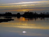 This is the sound of silence (EXPLORE) (kenny barker) Tags: sunset landscape scotland swan ngc explore natureselegantshots saariysqualitypictures selectbestexcellence sbfmasterpiece