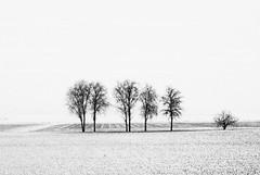Ieri neve ma anche oggi... (lorenzog.) Tags: winter bw white snow nikon bn neve inverno emiliaromagna d300 2011 gettyimagesitalyq1