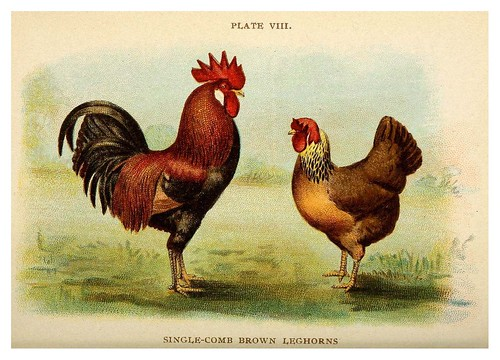 023-Biggle poultry book…1909- Jacob Biggle