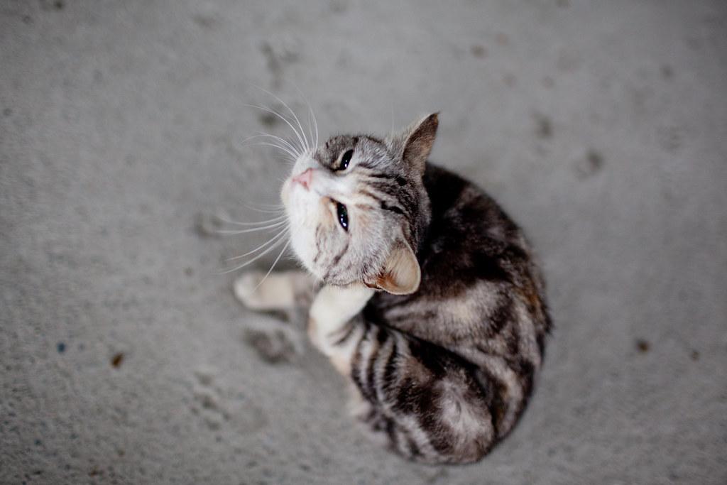 算是一個心願完成了一半~ 侯硐拍貓行 @3C 達人廖阿輝