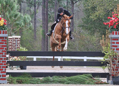 Derby competitor (carterse) Tags: horse jumper hunter rider jumps derby equine showjumping usef ushja horseshorseshow