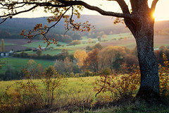 autumn power (Youronas) Tags: wood autumn sunset sun sunlight tree nature leaves forest landscape dusk feld meadow farmland fields mead bushes wald bume shrubs baum flur brushwood abenddmmerung undergrowth unterholz gebsch gestrpp