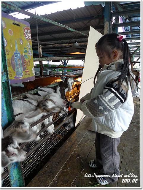 宜農牧羊場 (19)