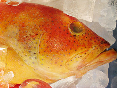Orange Fish at the Market (shaire productions) Tags: ocean sea orange fish color eye ice animal bright image market seafood grocery creature bold imagery