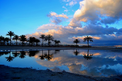 Landscape : Early Morning (pallab seth) travel winter sea sky cloud colour reflection tree water silhouette sunrise landscape bay spring spain nikon gulls dream dreamy traveling dslr mallorca palma gettyimages majorca balearicisland platjadepalma mediterraneanlandscape badiadepalma nikon1855mmf3556gafsdxvr d3100 nikond3100 stunningphotogpin
