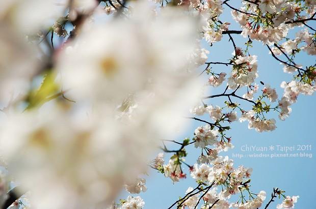 2011陽明山花季07.jpg