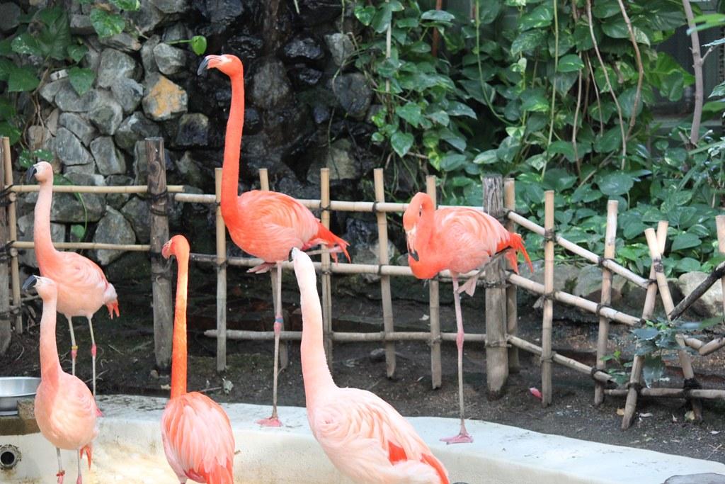 Sapporo Maruyama Zoo (21)