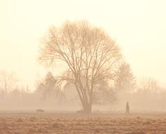loyal companion (Crazy Ivory) Tags: morning trees dog mist man tree public field misty fog walking square morninglight foggy symmetry tamron walkingthedog 18200mm tamron18200mm thelittledoglaughed gettyimagesgermanyq1 gettygermanyq2 gettygermanyq3 gettygermanyq4