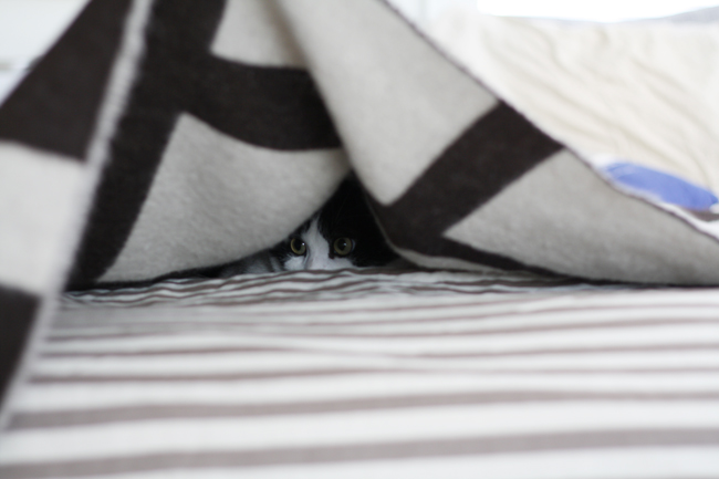 hide 'n seek