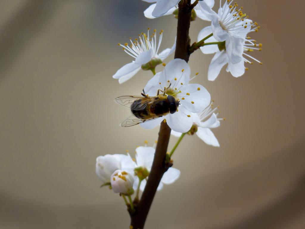 Los misterios de la primavera
