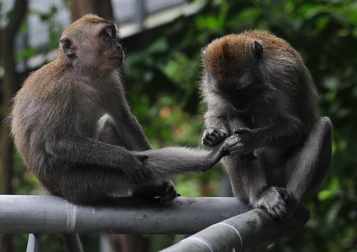 Monkey Pedicure