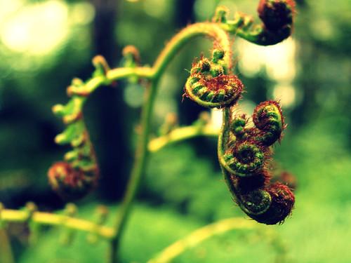 conservatory ferns