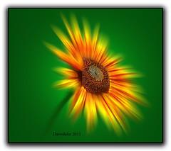 Radial Sunflower (daveduke) Tags: sunflower twop radialblur wonderfulworldofflowers 100commentgroup flickraward recoilx