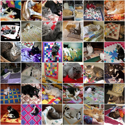 CATS WHO LOVE QUILTS 2 by KoolBeenz
