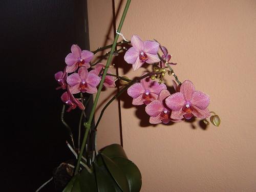orquideas-para-javiercorzo