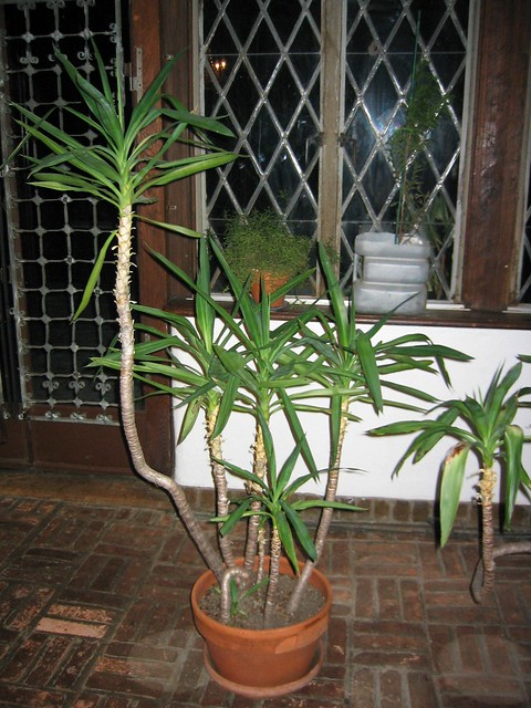 Dinner Room Plant